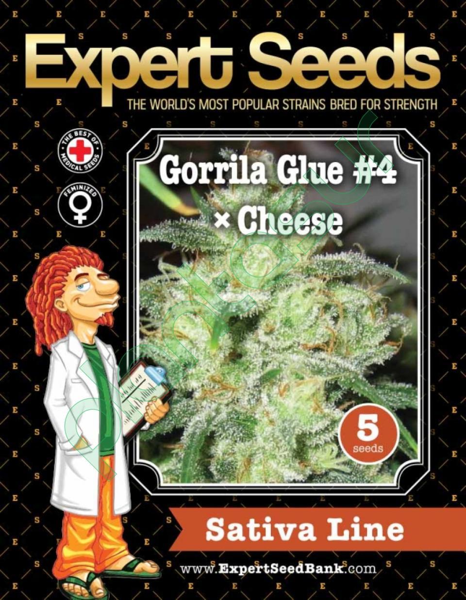5 FEM SEEDS - GORILLA GLUE # 4 X CHEESE   Plantasur, distribución al