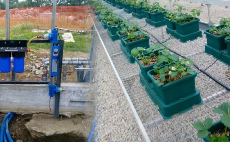 Cultivo de fresas con un sistema GrowMax instalado para eliminar el cloro